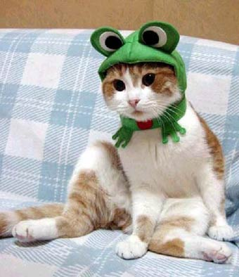 catpic.jpg