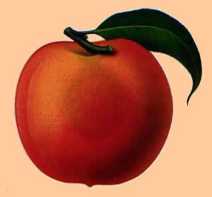 peach2-1.jpg