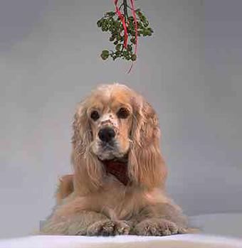 mistletoe2.jpg