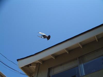 fly3.jpg